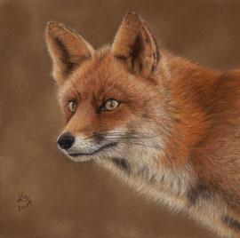 red fox portrait, pastel on pastelmat, 28 x 28 cm, reference photo Manon Bruijn, wildlifereferencephotos; SOLD