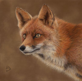red fox portrait, pastel on pastelmat, 28 x 28 cm, reference photo Manon Bruijn, wildlifereferencephotos; SOLD