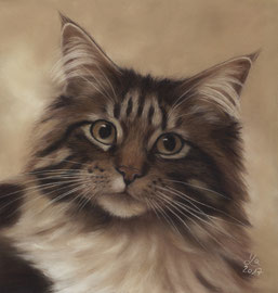 """Sylvester"", Maine Coon, pastel on pastelmat, 20 x 21 cm, commission"