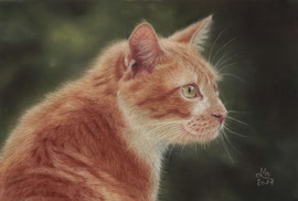 """Safran"", pastel on pastelmat, 20 x 30 cm, reference photo Cécilia Venturini; SOLD"