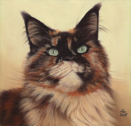 """Vinny"", black tortie Maine Coon, pastel on pastelmat, 29 x 30 cm, commission"