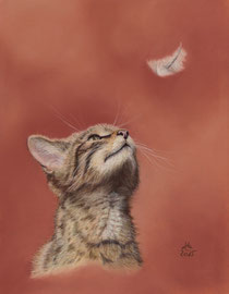 """watching a feather"", scottish wildkitten,  pastel on pastelmat, 20 x 25 cm, reference photo Peter Trimming"