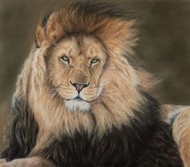 """Leonardo"", pastel on pastelmat, 41 x 46 cm, reference photo Tazi Brown, wildlifereferencephotos; SOLD"