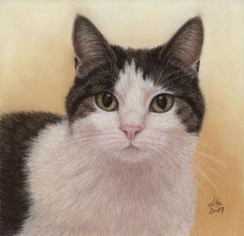 """Pauli"",  pastel on pastelmat,  20 x 20 cm, commission"