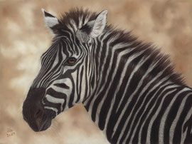 Zebra, pastel on pastelmat, 29 x 39 cm, reference photo Marna Buys, commission
