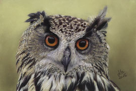eagle owl, pastel on pastelmat, 15 x 22 cm, reference photo Stuart Richards; SOLD