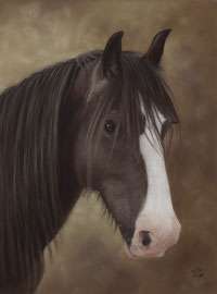 """Domino"", Irish Cob, pastel on pastelmat,  30 x 40 cm, commission"