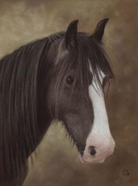 """""""Domino"""", Irish Cob, pastel on pastelmat,  30 x 40 cm, commission"""