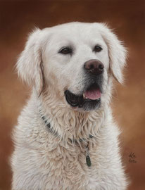 """Flori (Florentina of Jeschags Darling)"", Golden Retriever, pastel on pastelmat, 30 x 40 cm, commission"