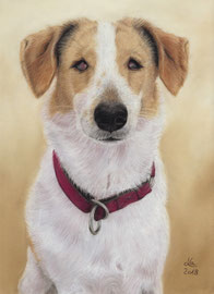 "blind ""Jack"", pastel on pastelmat, 21 x 30 cm, commission"