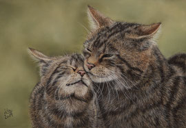"""a mother's love II, 2019"", pastel on pastelmat, 20 x 30 cm, reference photo Peter Trimming, commission"