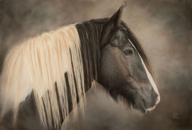 """Murphy"", Irish Cob, pastel on pastelmat, 40 x 60 cm, commission"