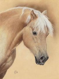 """Amigo"", Edelblut-Haflinger, pastel on pastelmat, 30 x 40 cm, commission"