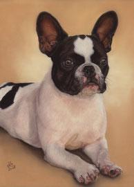 """Java"", french bulldog, pastel on pastelmat,  29 x 40 cm, commission"