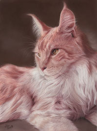 """""""Hector"""", red silver Maine Coon cat, pastel on pastelmat, 30 x 40 cm, commission"""