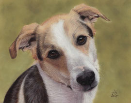"""Simon"", pastel on pastelmat, 22 x 28 cm, reference photo Yasmine Trinkle"