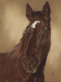 """Tequero"", Appaloosa, pastel on pastelmat, 29 x 39 cm, commission"