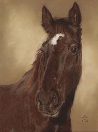 """Tequero"", Appaloosa, pastel on pastelmat, 29 x 39 cm, commission"