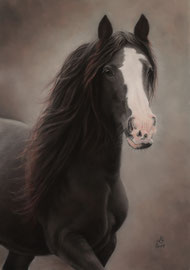 """Mona"", Irish Cob, pastel on pastelmat, 42 x 60 cm, commission"