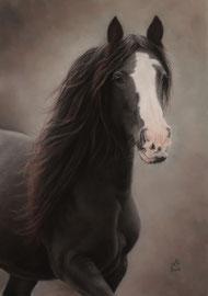 """Mona"", Irish Cob, pastel on pastelmat, 42 x 60 cm, commission"