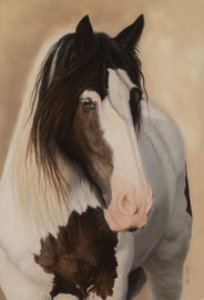"""Jack"", Irish Cob, pastel on pastelmat, 40 x 60 cm, commission"