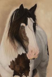 """Jack"", Irish Cob, pastel on pastelmat, 40 x 60 cm, commission"
