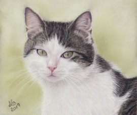 """""""Emil"""", pastel on pastelmat,  15 x 18 cm, private reference photo"""