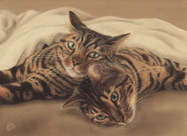 """Roshi + Goku"", Leopard cats, pastel on pastelmat, 21 x 29,5 cm, commission"