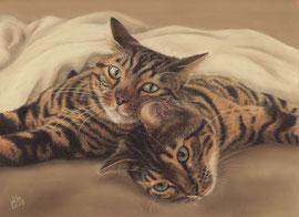 """Roshi + Goku"", Leopard cats, pastel on pastelmat, 21 x 29,5 cm, commission"