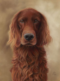 """Scotty"", Irish Red Setter, pastel on pastelmat, 30 x 40 cm, commission"