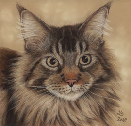 """Teddy"", Maine Coon, pastel on pastelmat, 20 x 21 cm, commission"