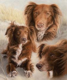 """Micky"", pastel on pastelmat, 42 x 51 cm, commission"