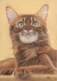 """Scheriat-El Kebir Wahdani"", Somali cat, pastel on pastelmat, 21 x 29 cm, reference photo Christine Kuch; SOLD!"