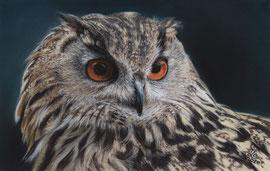 """Luise"", Eurasian Eagle Owl, pastel on pastelmat, 19 x 20 cm, reference photo Ian Murdoch"