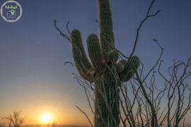 Sonnentergang am Dobbins Lookout