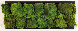 "213  Polemoss    60x25      ""By Verde Passione"""