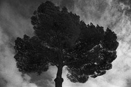 Pine under stormclouds (Serra de Llevant, Mallorca, Spain. 2019)