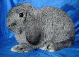 Питомник кроликов Весна Тула,породы кроликов, окрасы кроликов.