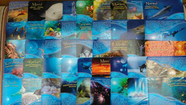 Ozean / Meer