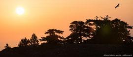 Grifone - Cime del Parco Nazionale del Pollino