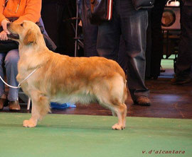 CRUFTS :5 eme working classe pour Highest Honore des JDE