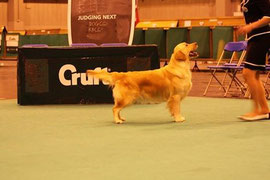 Highest 5 eme a Crufts