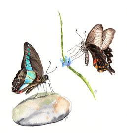 Papillons multicolore