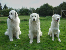 Gini, Luna und Tristan unsere Maremmano-Abruzzese Freunde