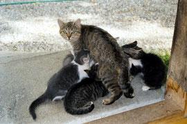 Minggi und ihre Kitten