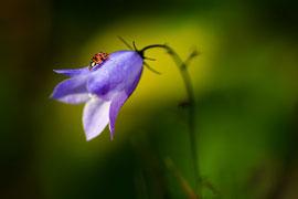 Blütenbesucher      Tamron 90 mm Macro