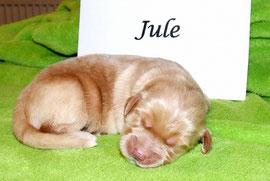 Ladies first - Jule
