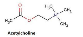 acétycholine