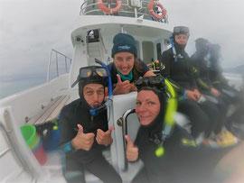 bucketliste-boot-delfinschwimmen