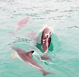 bucketliste-delfinschwimmen